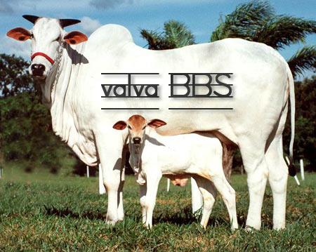 + v a l v a の B B S +